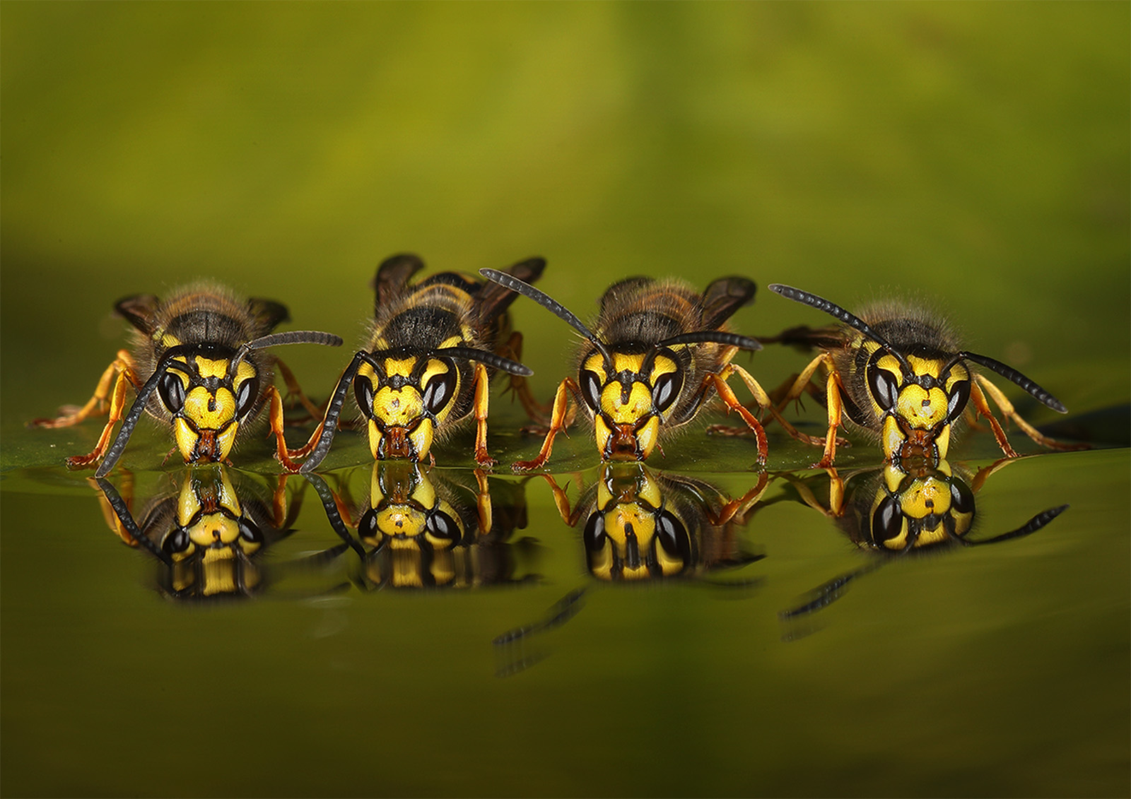 C0249180_Roy-Rimmer_Four-Wasps