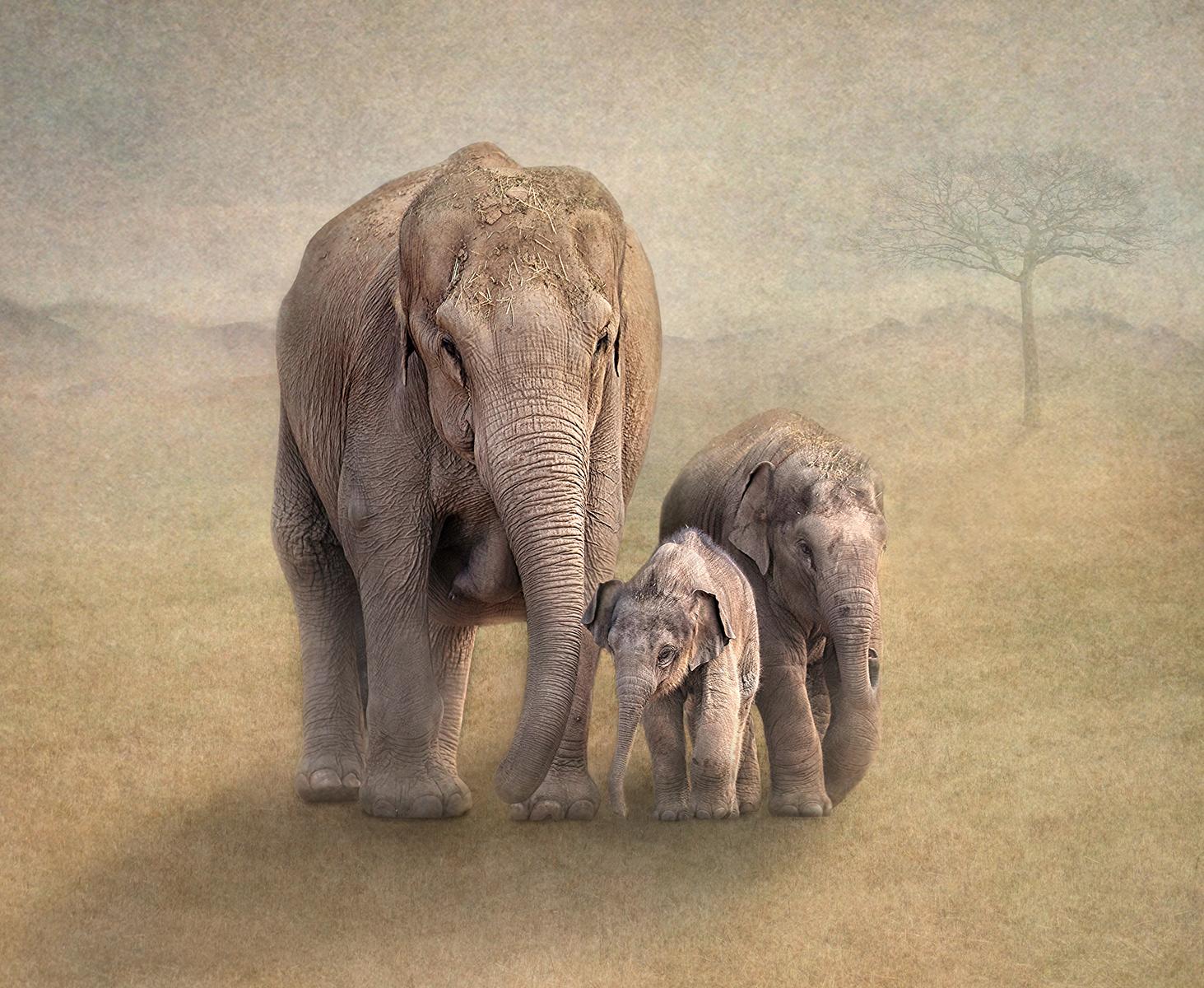 W0352464_Lynda Haney_Elephant Family