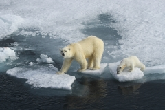 I0146006_Sue-Blythe_Living-on-thin-ice