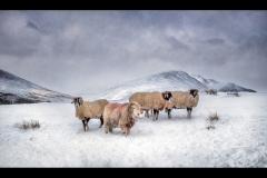 L0554209_Gordon Watson_Winter Woollies