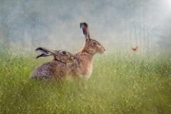 W0352465_Lynda Haney_In a Summer Meadow