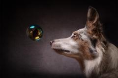 W0352719_Christine Johnson_Bubble Alert