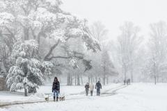 W0353563_Maggie Bullock_Winter Walk