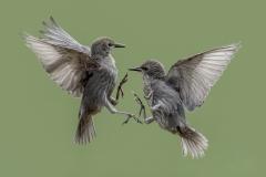 Best-Nature-Images-Phil-Barber-Gold