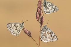 Best-Nature-Images-Tony-North-Bronze