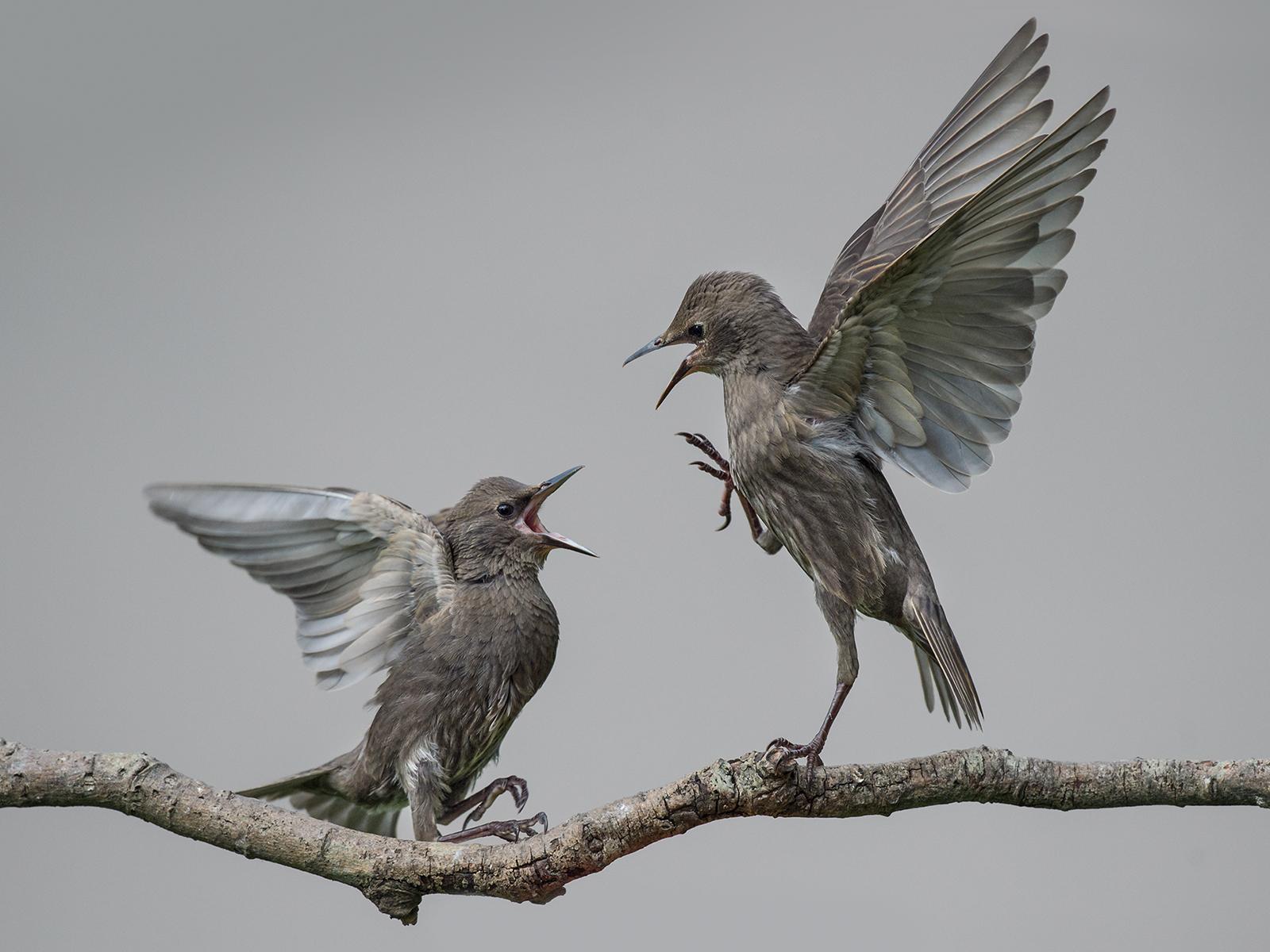 W0447188_Philip-Barber_Staring-fight